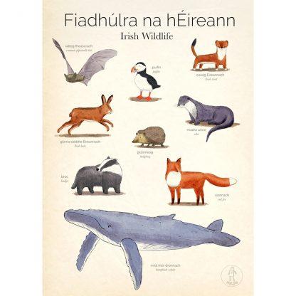 Irish wildlife poster